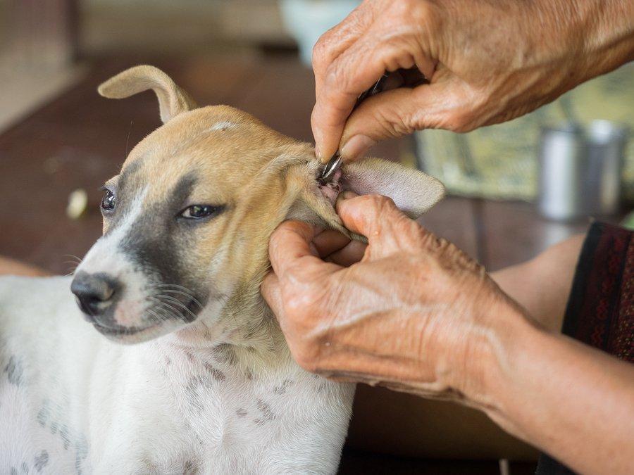 Kostenlose womon verdammte Hunde